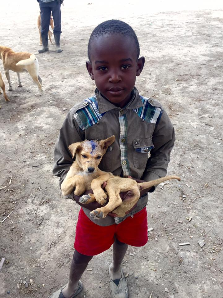 Boy With a Pup | Vet Treks Foundation