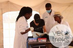 Kenya Veterinary Students